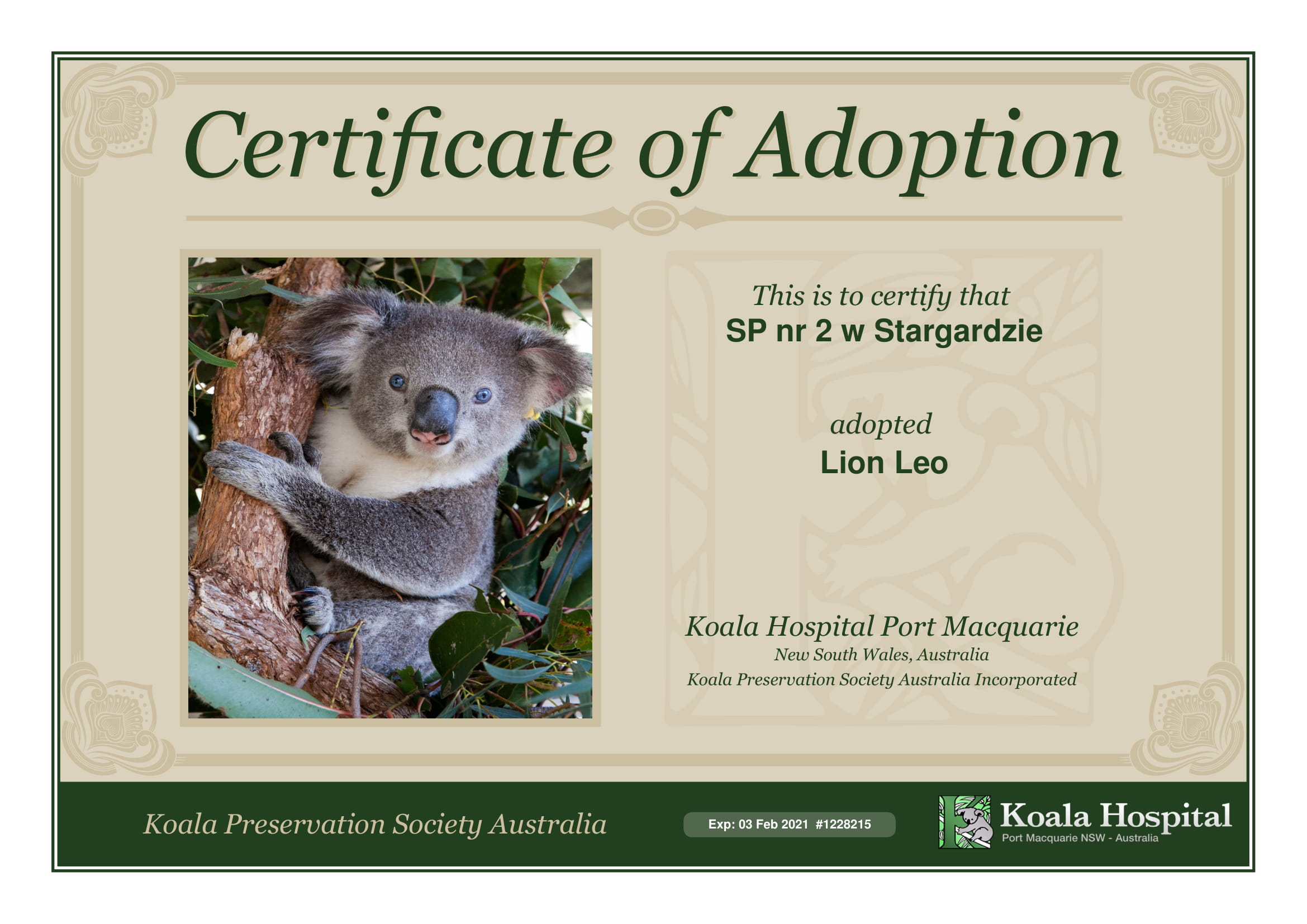 Koala Adoption Certificate 1
